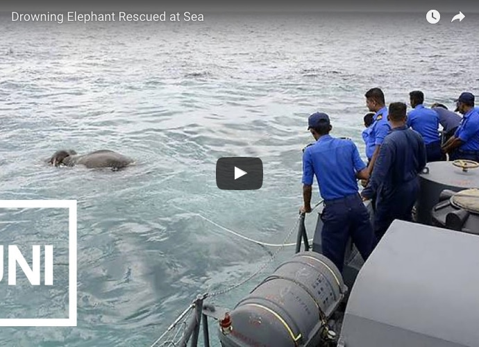 Elephant Survives Near Drown Experience After Being Rescued By Some Seamen